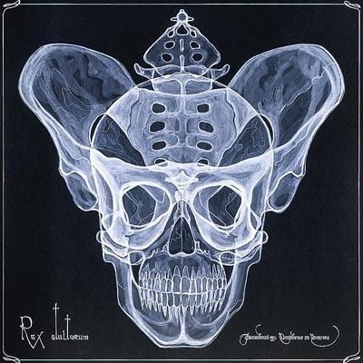 arte rayos X (18)