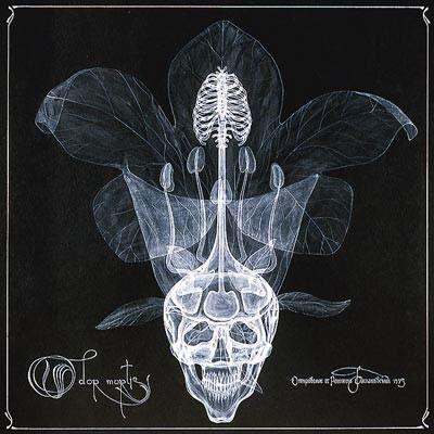 arte rayos X (16)