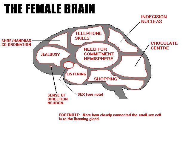 cerebro mujer