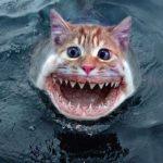 Peces gato aterrorizan China