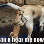 ¿Me escuchas ahora?