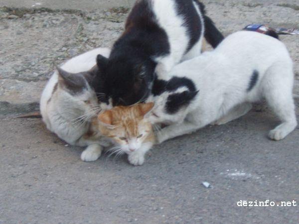 gato atacado
