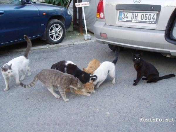 gato atacado pandilla