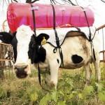 Los pedos de vaca y el calentamiento global