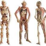Composición del cuerpo humano.