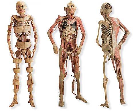 Composición del cuerpo humano. | Marcianos