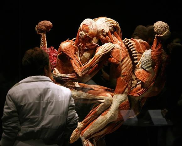 museo_cuerpos_04