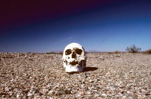 Migrant-Skull[1]
