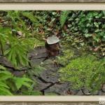 bosque_encantado_imagen-10