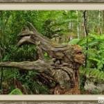 bosque_encantado_imagen-12