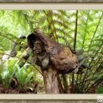 bosque_encantado_imagen-14