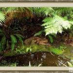 bosque_encantado_imagen-2
