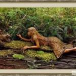 bosque_encantado_imagen-4