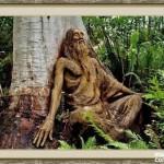 bosque_encantado_imagen-6