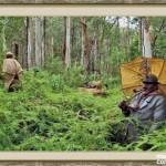 bosque_encantado_imagen-7