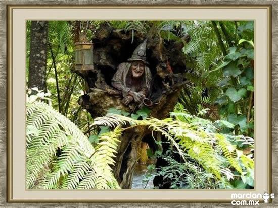 bosque_encantado_imagen-9