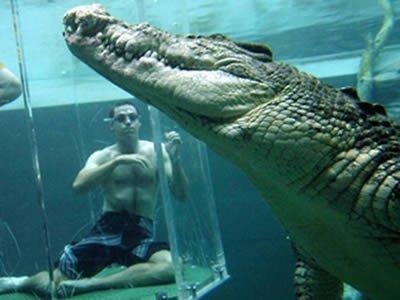 cocodrilo_piscina