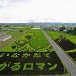 Arte en campos de arroz.
