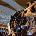 Esqueleto de tiranosaurio en venta.