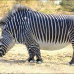 Animales Photoshop