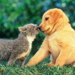 Los perros, mejores mascotas que los gatos