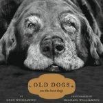 10 razones para adoptar un perro viejo