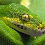 Nacidos para matar: increíbles imágenes de depredadores.