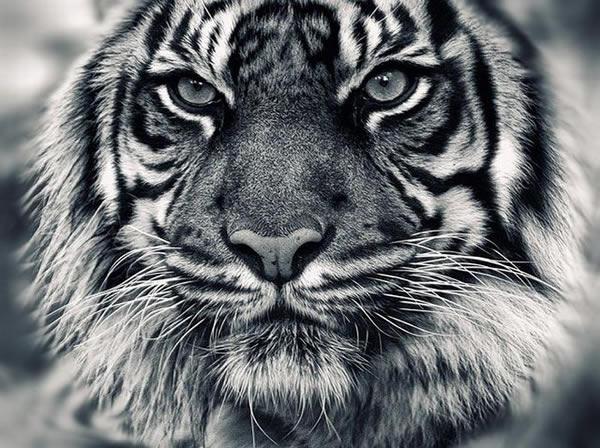 depredadores (25)