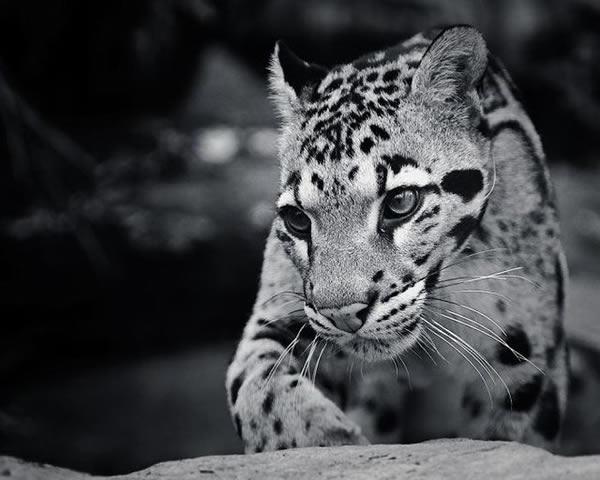 depredadores (2)