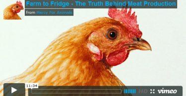 documental granja refrigerador