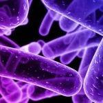 Superbacteria NDM-1