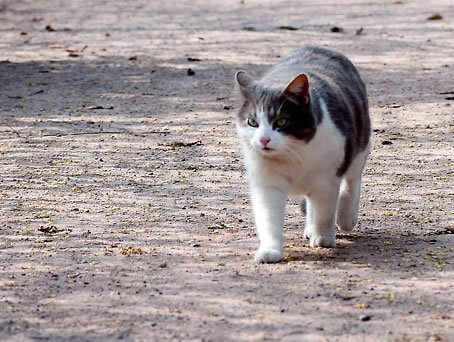 Gato Oscar