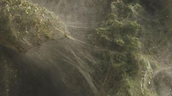 Arañas Pakistan (5)