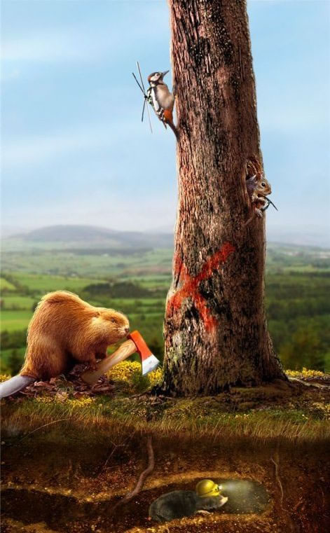 Animales Photoshop (29)