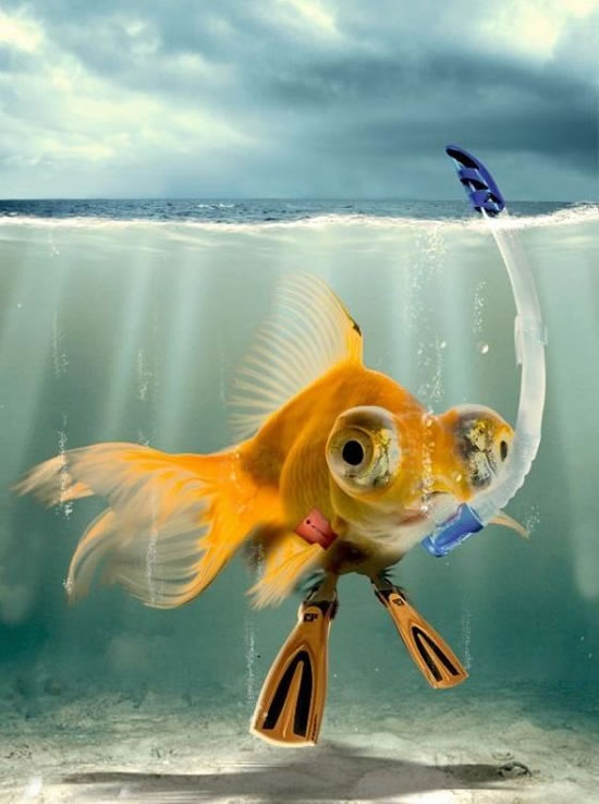 Animales Photoshop (4)