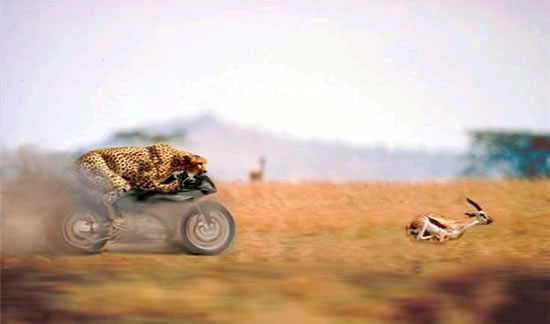 Animales Photoshop (24)