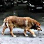 La historia del perro Canelo