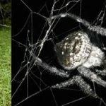 Top 10 nuevas especies del 2011
