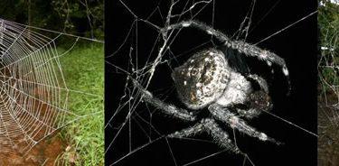 Top 10 nuevas especies del 2011 (10)