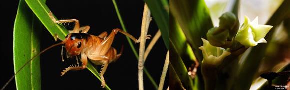 Top 10 nuevas especies del 2011 (9)