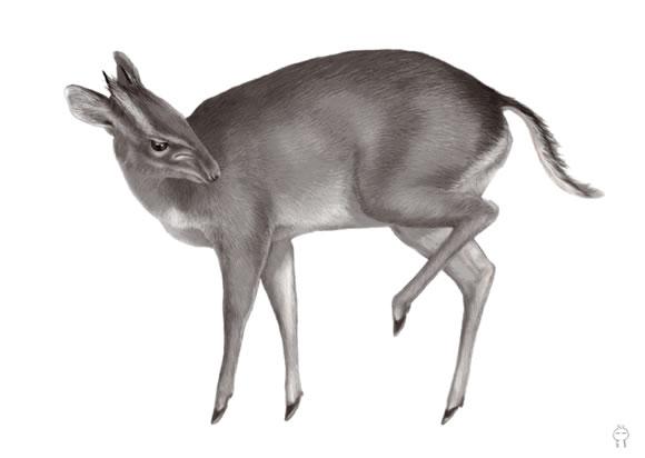 Top 10 nuevas especies del 2011 (5)