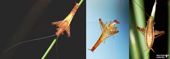 Top 10 nuevas especies del 2011 (3)
