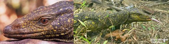 Top 10 nuevas especies del 2011 (1)