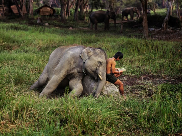 Fotos de Steve McCurry (3)