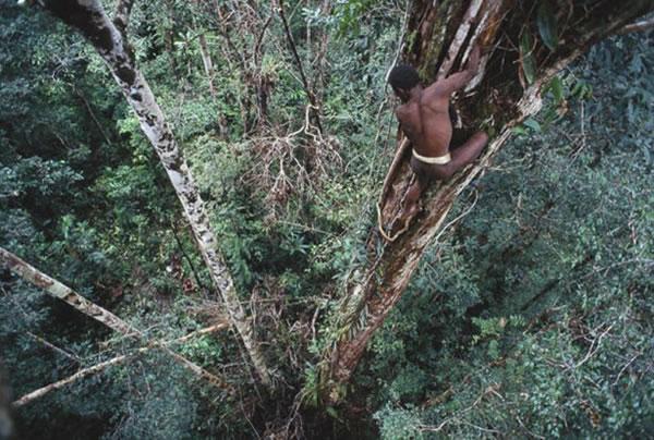La extraña tribu Korowai (1)
