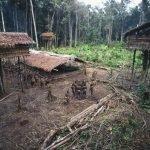 La extraña tribu Korowai