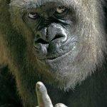 Chiste: El gorila y el hombre