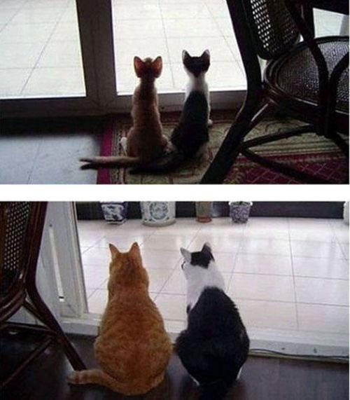 verdaderos amigos (4)