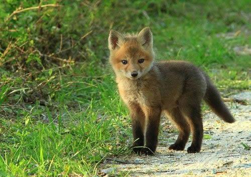 Animales lindos (14)