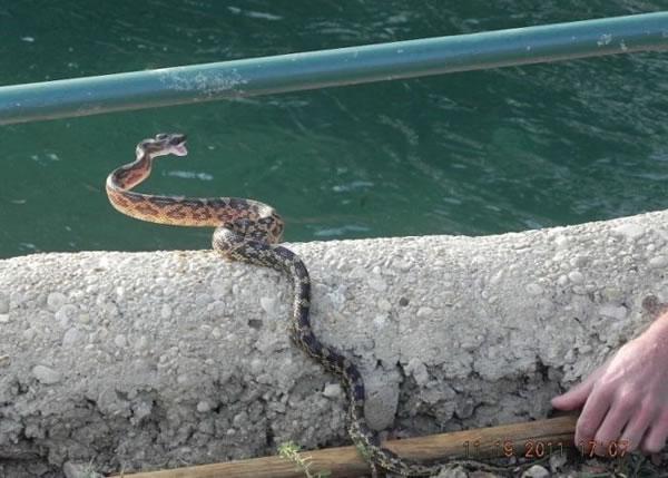 Halcón VS Serpiente (6)